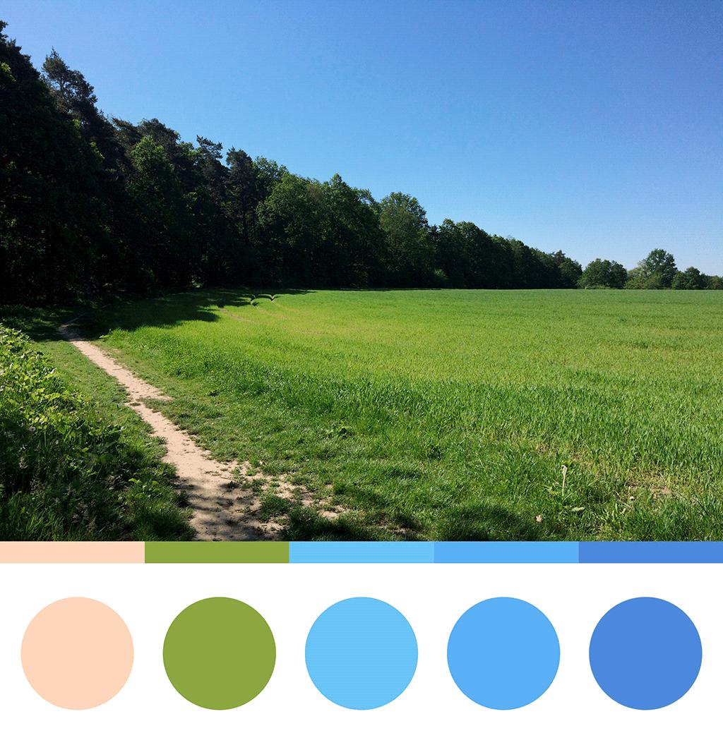 Pejzaž iz Ostravske šume, paleta boja sa fotografije