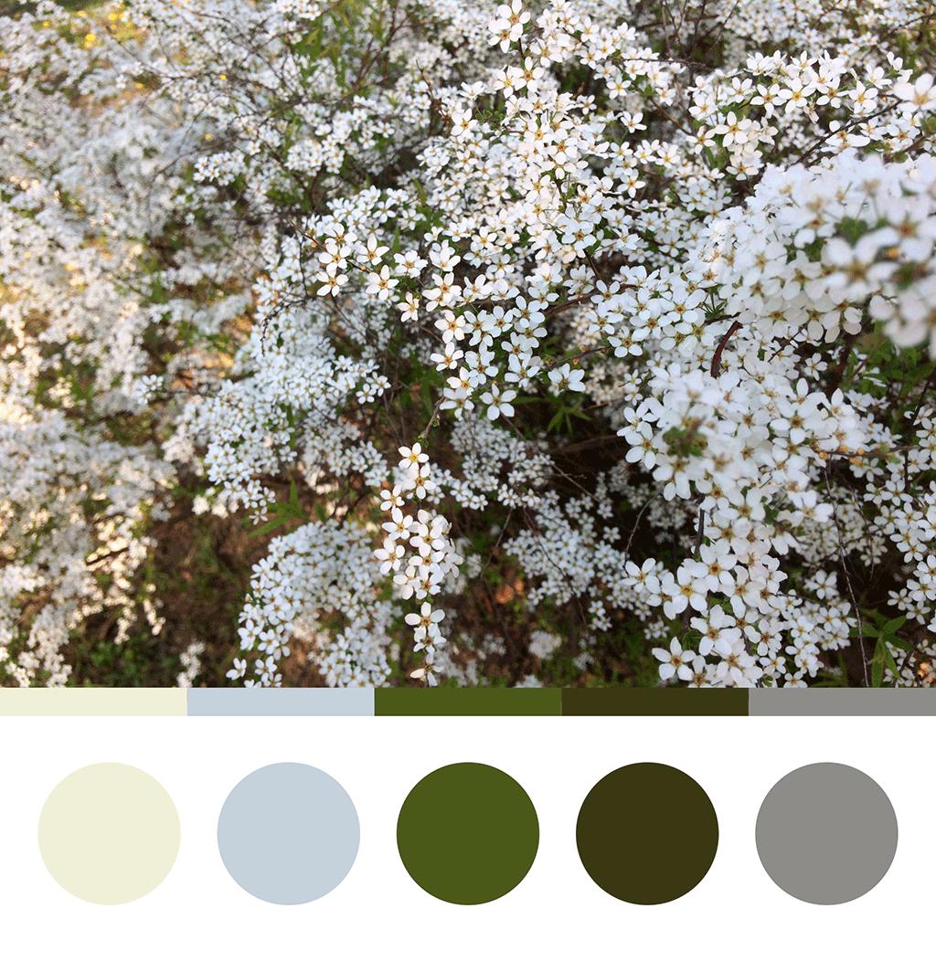 Mnoštvo sitnih cvetova na zelenim grancicama, paleta boja sa fotografije