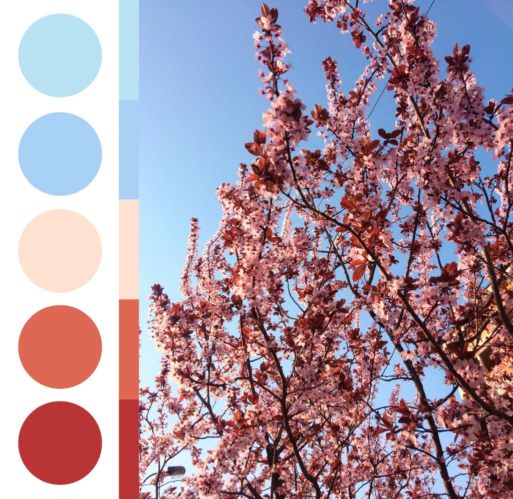 Mnoštvo purpurnih cvetova na granama, paleta boja iz fotografije
